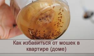 Как справиться с насекомыми